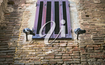 travel to Italy - pigeons near closed window of medieval house in Siena city in winter