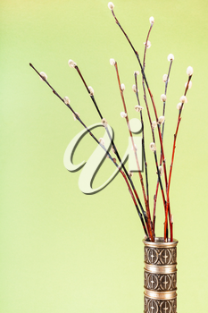 vertical pussy willow sunday (palm sunday) feast still-life - downy pussy-willow twigs in vintage pewter jug on khaki pastel background