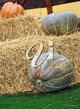 Thanksgiving Display of Pumpkins and hay stacks.Toned image.