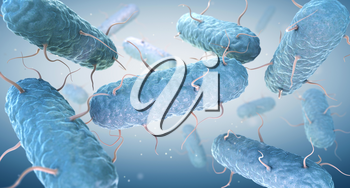 Enterobacteria. Enterobacteriaceae are a large family of Gram-negative bacteria. 3D illustration