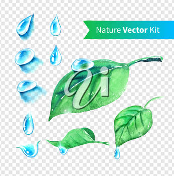 Hand drawn water drops and leaves set on transparent background. Vector EPS 10. Isolated