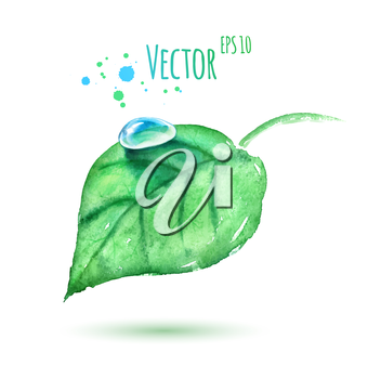 Watercolor leaf. Isolated. Vector illustration.