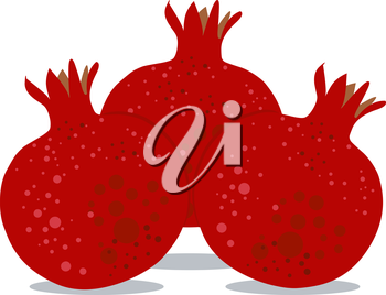 Vector illustration coloring page of Pomegranates for Rosh Hashanah the Jewish New Year.