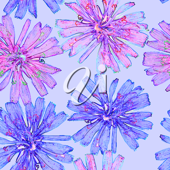 Vector graphics, artistic, stylized image of a seamless pattern  flower chicory on a blue background