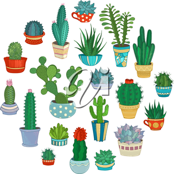 A variety of decorative cactus in flower pots and cups. Some of them are with prickles or flowers.