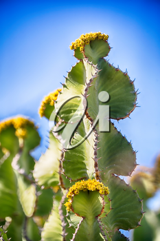 in south africa flower  sky and cactus with thorn like background