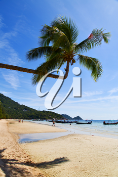 sun ligt  asia in the  kho tao bay isle white  beach    rocks  boat   thailand  and south china sea anchor