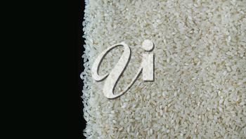 Pile of rice or wholegrain spill right on black background. Agriculture food raw seed. Closeup macro photo