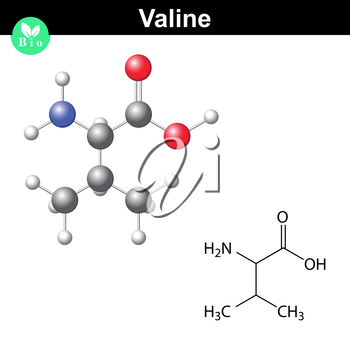 Valine proteinogenic amino acid - chemical formula and model, 2d and 3d illustration, vector on white background, eps 8