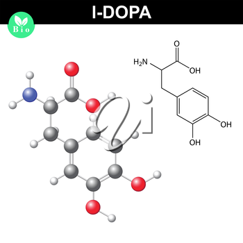 L-dopa neurotransmitter precursor chemical structure, 2d and 3d vector illustration of  molecular structure and chemical model, isolated on white background, eps 8