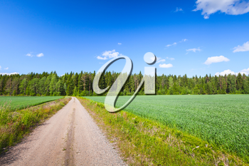 Strait empty rural road near green field under blue sky with clouds in bright summer day. Empty landscape background photo of Finland