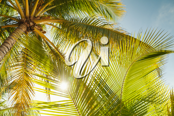 Coconut palm tree leaves over bright sky background. Warm toned photo with lens glow filter effect