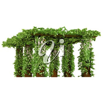 Arbor for the gardening purposes that covered with mass of green leaves and pink flowers pergola