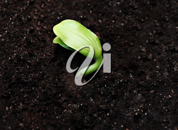 Green sprout in the ground, hoigh resolution