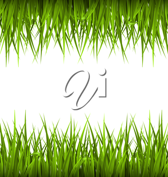 Green grass like frame isolated on white. Floral eco nature background