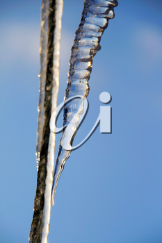 Close-up of Icicles. Winter nature