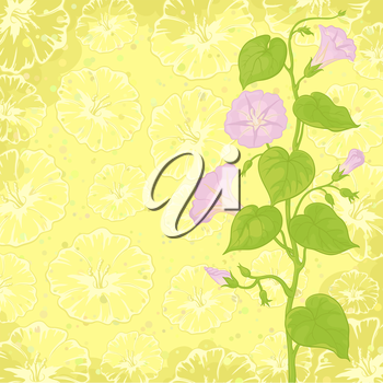 Yellow background with Ipomoea flowers and leaves. Vector