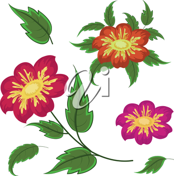 Flowers and green leaves dahlia, isolated on white background. Vector