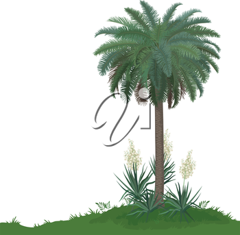 Tropical palm tree with green leaves and plants Yucca, isolated on white background. Vector