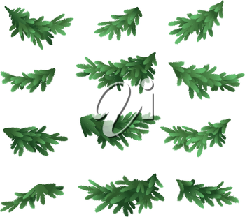 Christmas tree green branches set isolated on white background. Vector