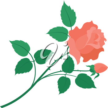 Flower rose with green leaves and red petals isolated on white background. Vector