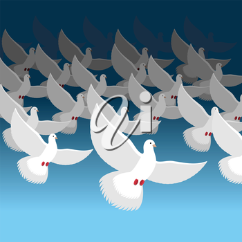 Flock of doves into sky. Blue cloud and white pigeons. flock of Flying birds. lot of white doves.
