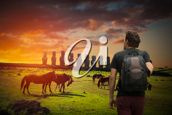 A traveler with a backpack. Horse on Easter Island at sunset walk around statues