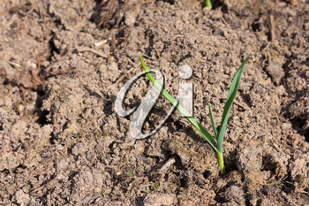 Agricultural industry and new young life in nature concept - small young green plant sprout in dry cultivated brown plowed soil under summer sunlight, closeup view