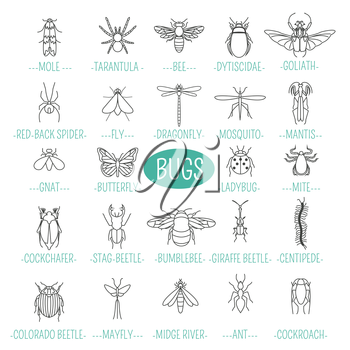 Insects icon flat style. 24 pieces in set. Outline version. Vector illustration