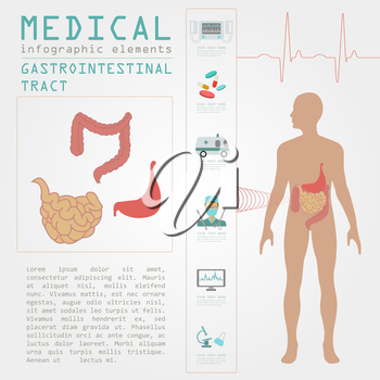 Medical and healthcare infographic, gastrointestinal tract infographics. Vector illustration