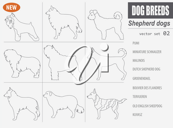 Shepherd dog breeds, sheepdogs set icon isolated on white. Outline, linear version. Vector illustration