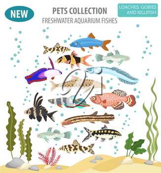 Freshwater aquarium fishes breeds icon set flat style isolated on white. Loaches, gobies, killifishes. Create own infographic about pets. Vector illustration
