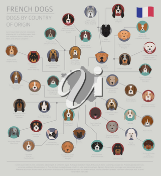 Dogs by country of origin. French dog breeds. Infographic template. Vector illustration