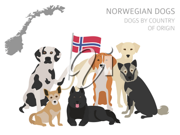 Dogs by country of origin. Norwegian dog breeds. Infographic template. Vector illustration