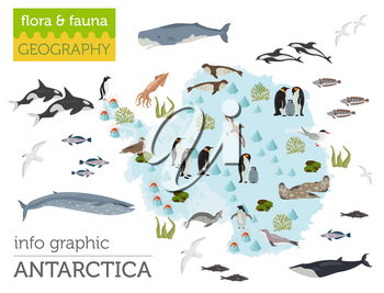 Antarctic, Antarctica,  flora and fauna map, flat elements. Animals, birds and sea life big set. Build your geography infographics collection. Vector illustration