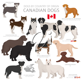 Dogs by country of origin. Canadian dog breeds. Shepherds, hunting, herding, toy, working and service dogs  set.  Vector illustration