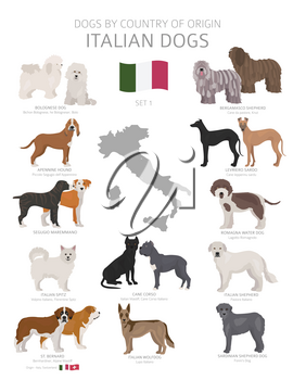 Dogs by country of origin. Italian dog breeds. Shepherds, hunting, herding, toy, working and service dogs  set.  Vector illustration