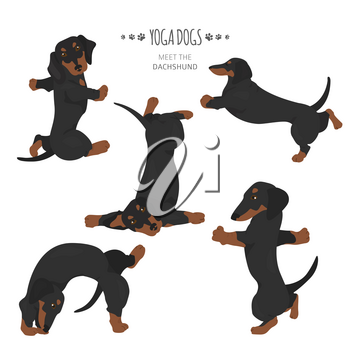 Yoga dogs poses and exercises. Dachshund clipart. Vector illustration