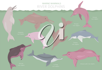 River dolphins set. Marine mammals collection. Cartoon flat style design. Vector illustration