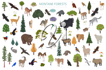 Montane forest biome, natural region infographic. Isometric version. Terrestrial ecosystem world map. Animals, birds and vegetations ecosystem design set. Vector illustration