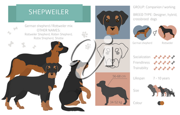 Designer dogs, crossbreed, hybrid mix pooches collection isolated on white. Shepweiler flat style clipart infographic. Vector illustration