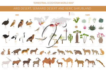 Desert biome, xeric shrubland natural region infographic. Terrestrial ecosystem world map. Animals, birds and vegetations design set. Vector illustration