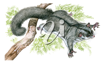 Royalty Free Clipart Image of a Flying Squirrel