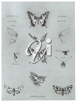 Royalty Free Clipart Image of Butterflies and Moths