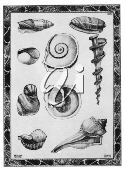 Royalty Free Clipart Image of Shells