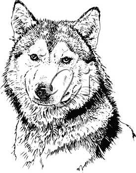 Royalty Free Clipart Image of a Husky