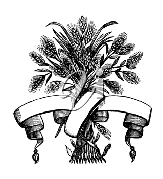 Royalty Free Clipart Image of a Scroll Wrapped around Wheat