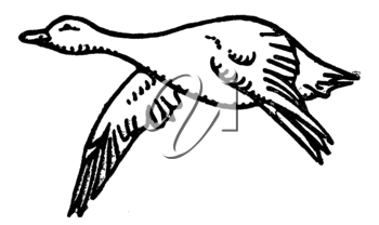 Royalty Free Clipart Image of a Goose