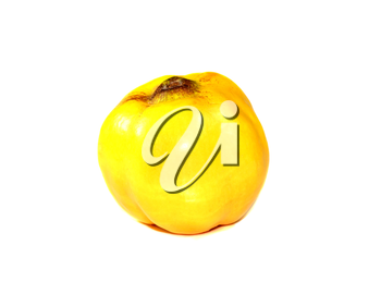 Ripe fruit of a quince isolated on a white background