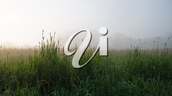 Panoramic shot of the grass early in the morning in the fog. Shallow depth of field. Focus on foreground.
